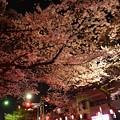 16中野通り夜桜3