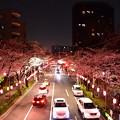 16中野通り夜桜5