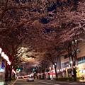 16中野通り夜桜6