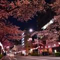 16中野通り夜桜7