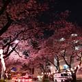 16中野通り夜桜8