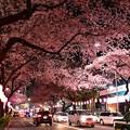 16中野通り夜桜9