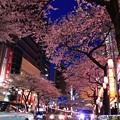 16中野通り夜桜10