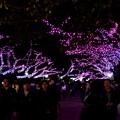 Photos: 16上野公園2