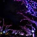 Photos: 16上野公園4
