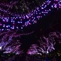 Photos: 16上野公園8