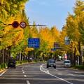 Photos: 1711高尾2