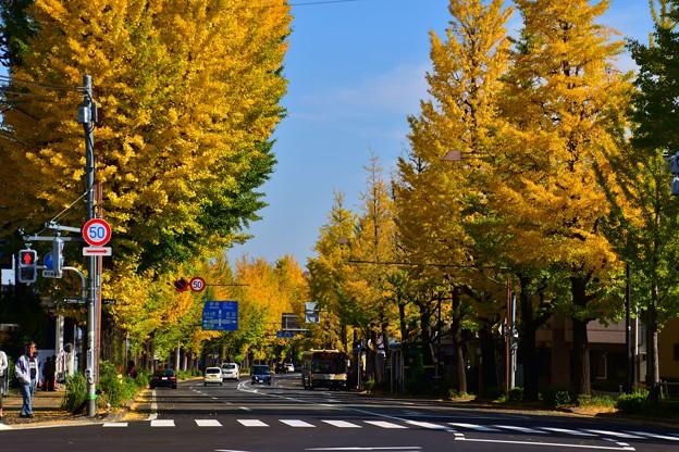 Photos: 1711高尾5