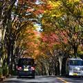 Photos: 1711高尾8