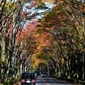 Photos: 1711高尾9