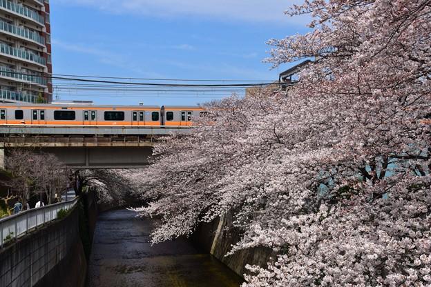 18東中野桜と中央線