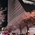 18中野通り夜桜2