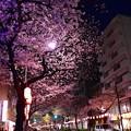18中野通り夜桜7