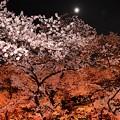 Photos: 18上野公園8