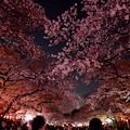 Photos: 18上野公園9