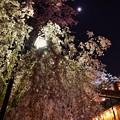 Photos: 18上野公園10