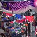 写真: 亀戸商店街こいのぼり