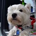 写真: お留守番犬
