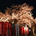 Photos: 19高尾夜桜1