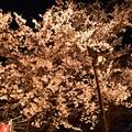 Photos: 19高尾夜桜2