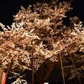 Photos: 19高尾夜桜3