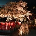 19高尾夜桜14