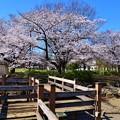 Photos: 19亀戸11