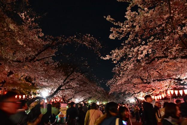 Photos: 19上野公園桜1
