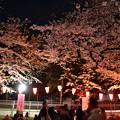 Photos: 19上野公園桜3