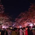 Photos: 19上野公園桜4