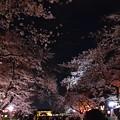 Photos: 19上野公園桜5