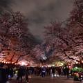 Photos: 19上野公園桜7