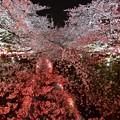 Photos: 19中目黒夜桜1