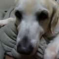 Photos: す~犬17