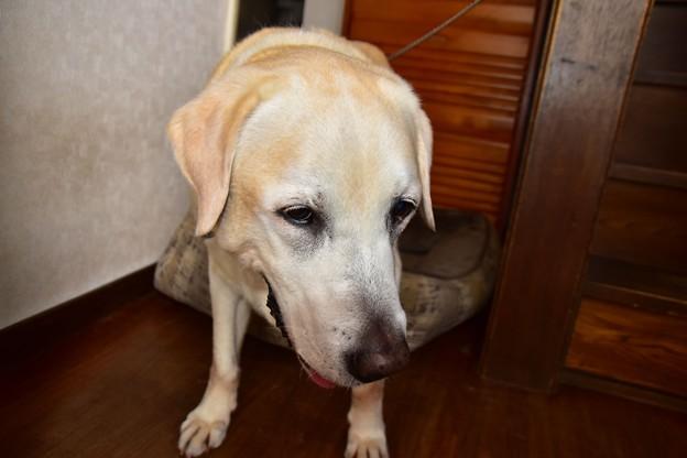 Photos: す~犬26