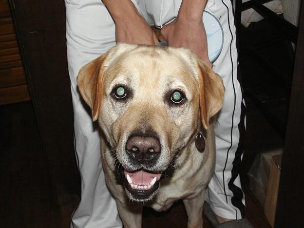 Photos: す~犬1
