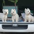 Photos: マコトさんの犬1