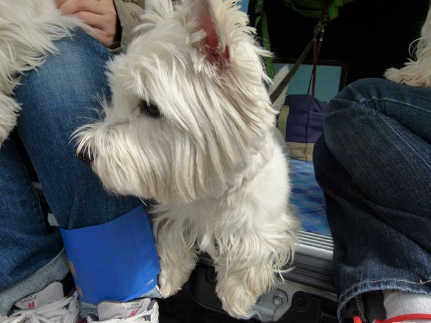 マコトさんの犬2