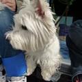 Photos: マコトさんの犬2