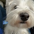 Photos: マコトさんの犬3