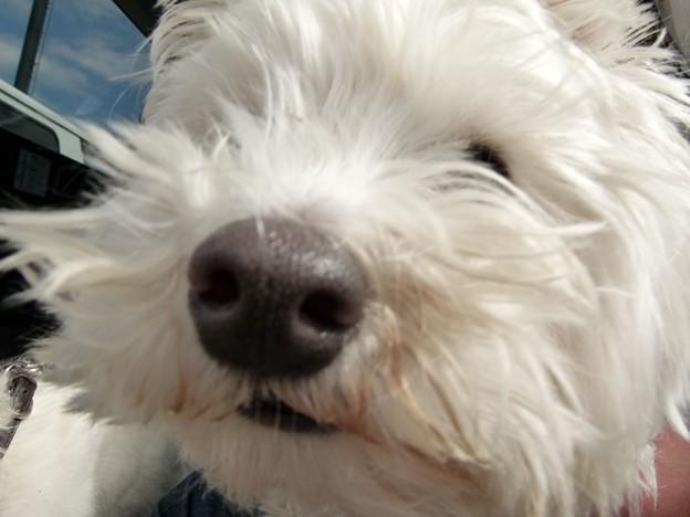 マコトさんの犬4