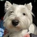 Photos: マコトさんの犬5