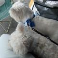 Photos: マコトさんの犬7
