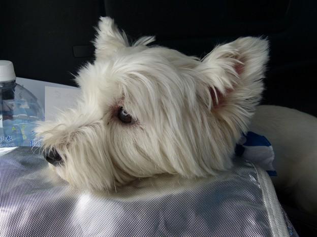 マコトさんの犬9