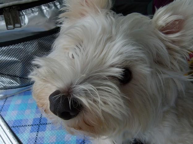 マコトさんの犬10