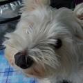 Photos: マコトさんの犬10