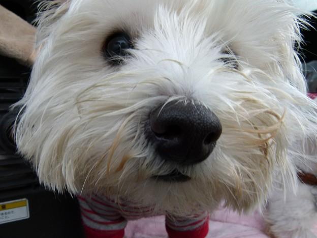 マコトさんの犬13