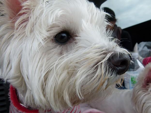 マコトさんの犬14