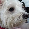 Photos: マコトさんの犬14