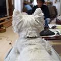 Photos: マコトさんの犬15